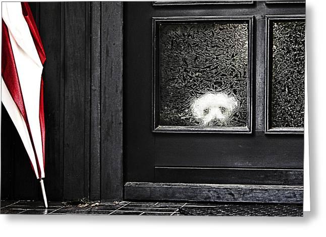 Frontdoor Greeting Cards - Felix alone at home Greeting Card by Joachim G Pinkawa