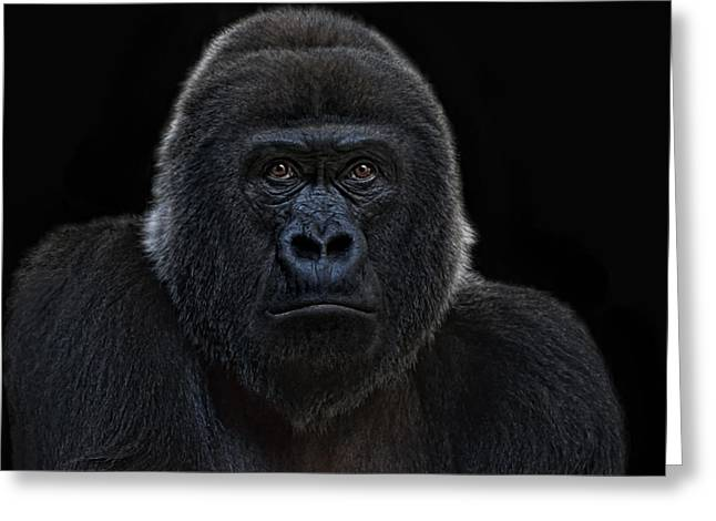 Female Gorilla Greeting Card by Joachim G Pinkawa