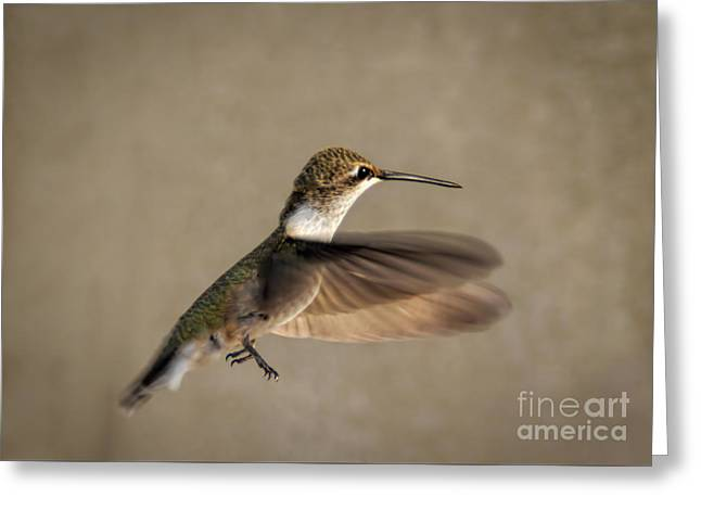 Flying Animal Greeting Cards - Female Hummingbird Greeting Card by Janice Rae Pariza
