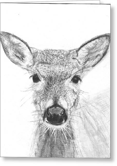 Marqueta Graham Greeting Cards - Female White-tailed Deer Greeting Card by Marqueta Graham