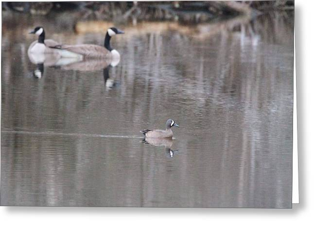 Hunting Cabin Photographs Greeting Cards - Female Wood Duck And Canada Geese Greeting Card by Dan Sproul
