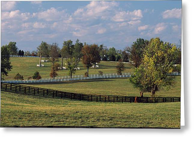 Fence In A Pasture, Lexington, Fayette Greeting Card by Panoramic Images