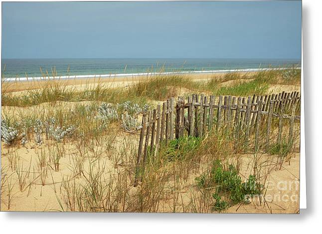 Fence In The Dunes Greeting Card by Carlos Caetano