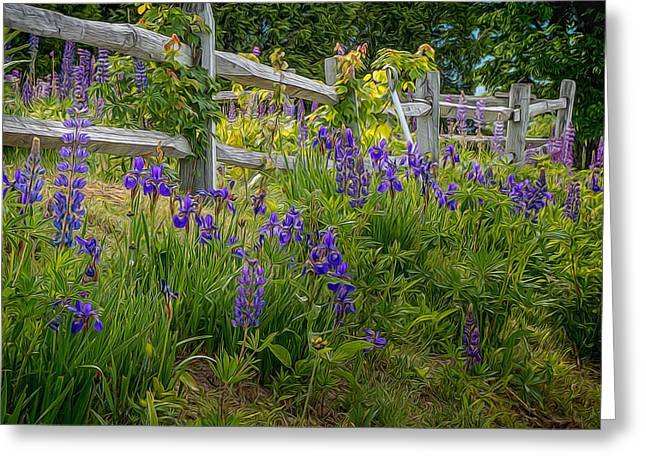 Fence With Lupine And Irises Greeting Card by Diane Moore