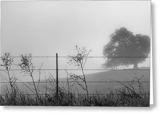 Fenced In Greeting Card by Joseph Smith