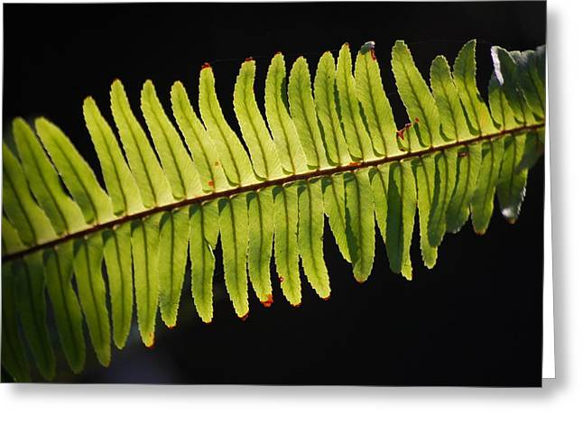 Amy Turner Greeting Cards - Fern Greeting Card by Amy Turner