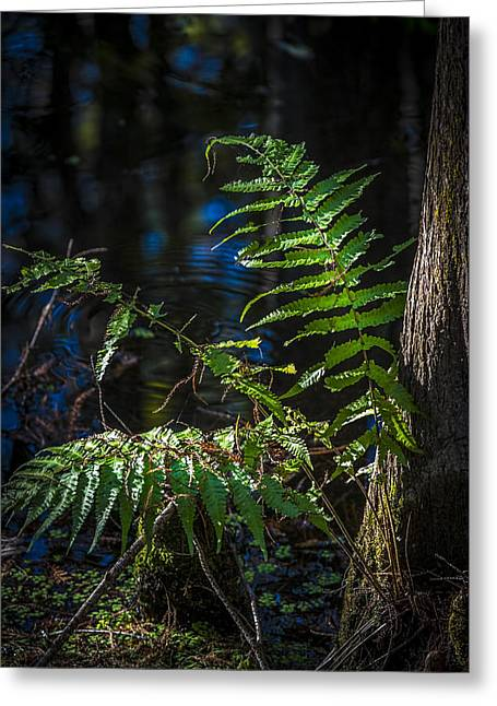 Wooden Building Greeting Cards - Fern and Cypress Greeting Card by Marvin Spates