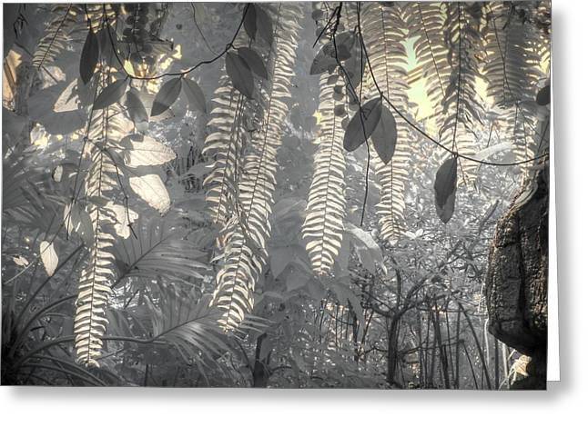Infared Photography Greeting Cards - Fern Botanical Greeting Card by Jane Linders