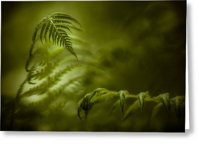 Unwind Photographs Greeting Cards - Fern Encounter Greeting Card by Chris Bordeleau