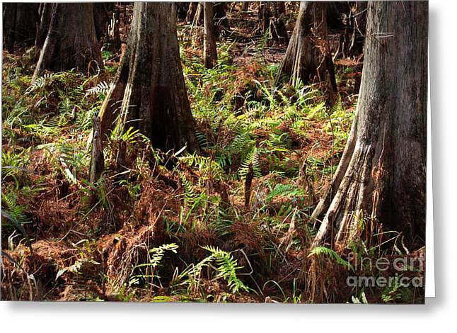 Forest Floor Greeting Cards - Fern Forest Floor Greeting Card by Carol Groenen
