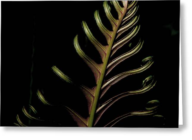 Fern In Green Greeting Card by John Adams