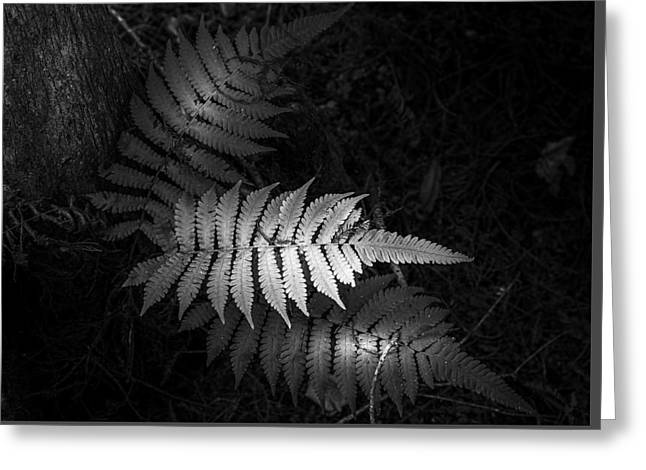 Wooden Building Greeting Cards - Fern Life b/w Greeting Card by Marvin Spates