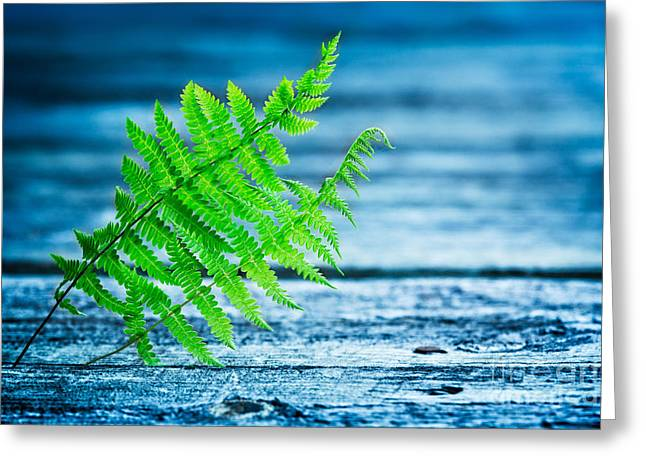 Nature Center Greeting Cards - Fern on Dock Greeting Card by Todd Bielby