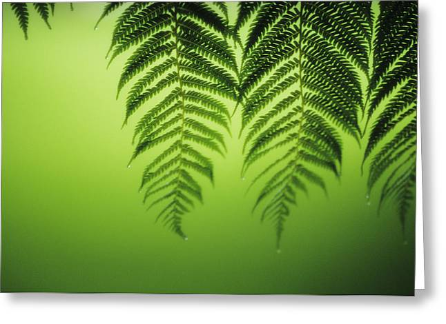 Dewdrops Greeting Cards - Fern on Green Greeting Card by Ron Dahlquist - Printscapes