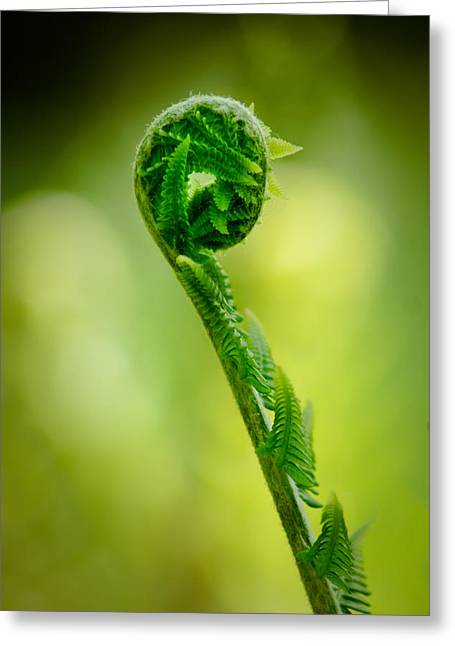 Unwind Photographs Greeting Cards - Fern unwound Greeting Card by Chris Bordeleau