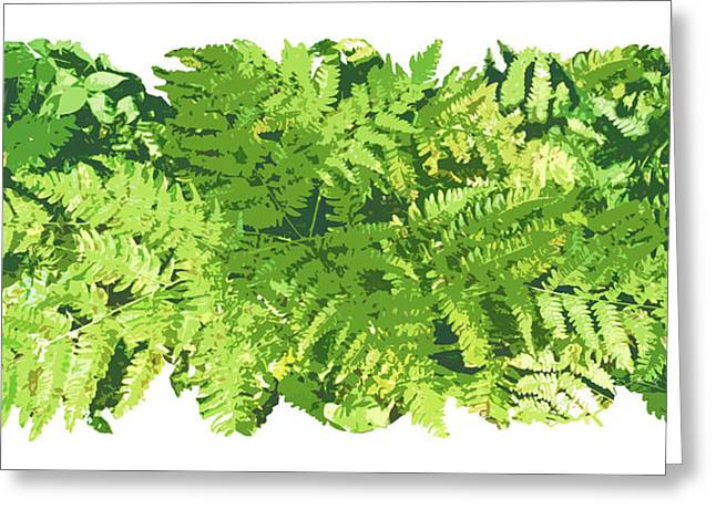 Fern Greeting Cards - Fern Vignette Greeting Card by JQ Licensing