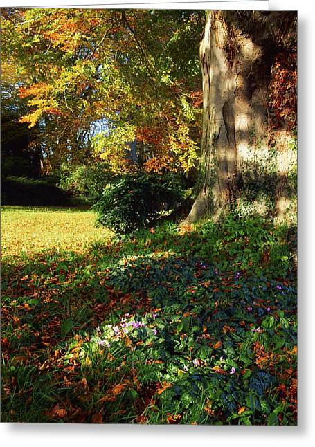 The Irish Image Collection Greeting Cards - Fernhill Gardens, Co Dublin, Ireland Greeting Card by The Irish Image Collection