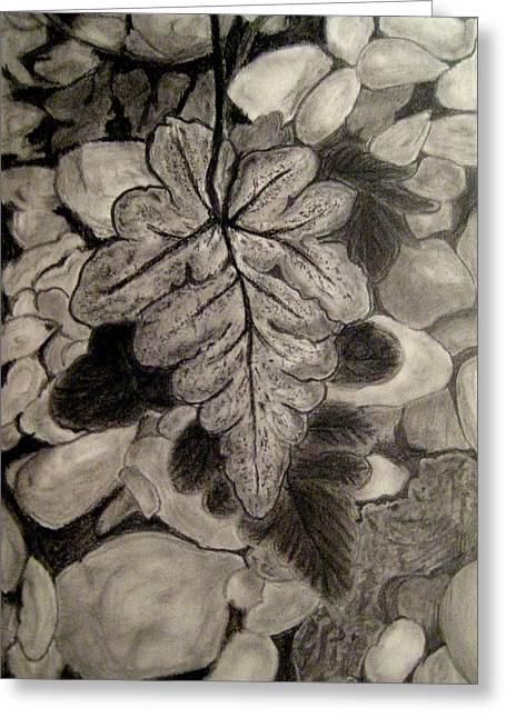 Ferns And Pebbles Greeting Card by Sowjanya Sreeram