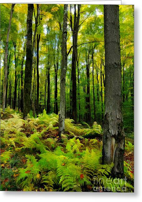 Ferns In The Forest - West Virginia Greeting Card by Dan Carmichael