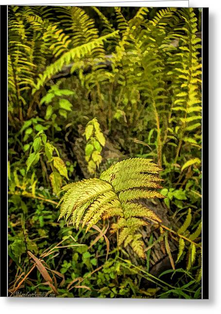Nature Center Pond Greeting Cards - Ferns on Miller Pond Boardwalk 3 Greeting Card by LeeAnn McLaneGoetz McLaneGoetzStudioLLCcom