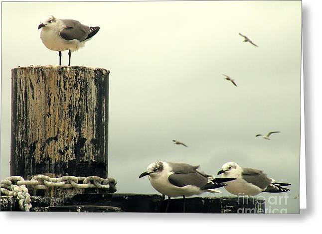 Flying Seagull Greeting Cards - Ferry Hypnosis Greeting Card by Joe Jake Pratt
