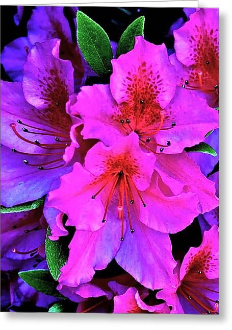 Festive Azalea Greeting Card by Gwyn Newcombe