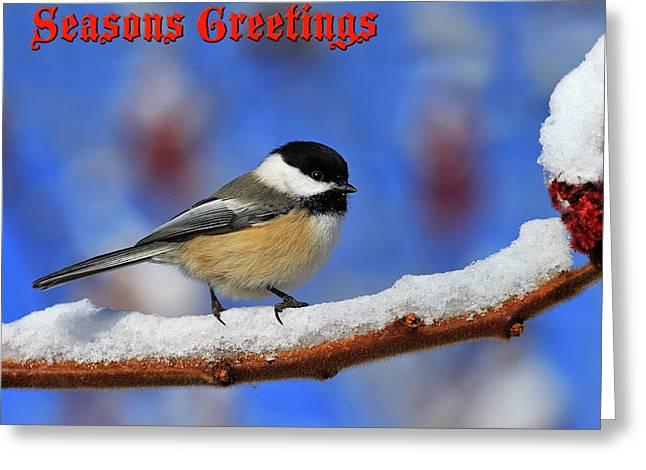 Festive Chickadee Greeting Card by Tony Beck