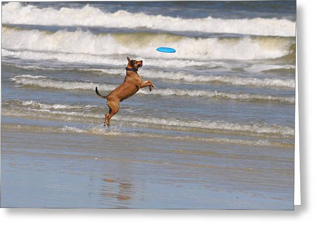 Dog At Play Greeting Cards - Fetchin the Frisbee Greeting Card by Debbie Williams