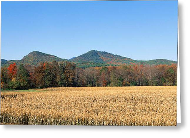 Panoramics Greeting Cards - Field And Mountains, New York Greeting Card by Panoramic Images