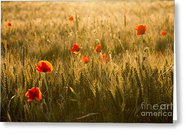 Field And Poppies Greeting Card by Sophie De Roumanie