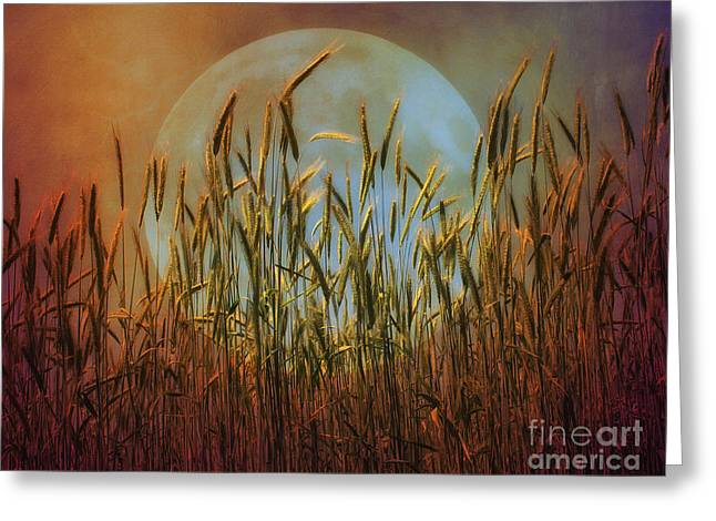 Fairies Photographs Greeting Cards - Field landscape Greeting Card by SK Pfphotography