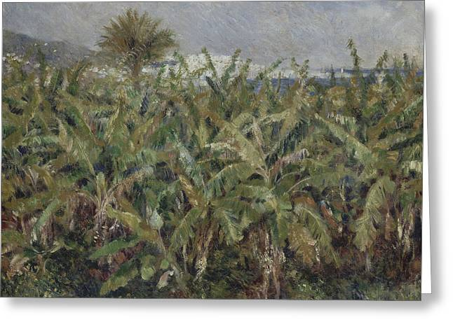 Renoir Greeting Cards - Field of Banana Trees  Greeting Card by Auguste Renoir