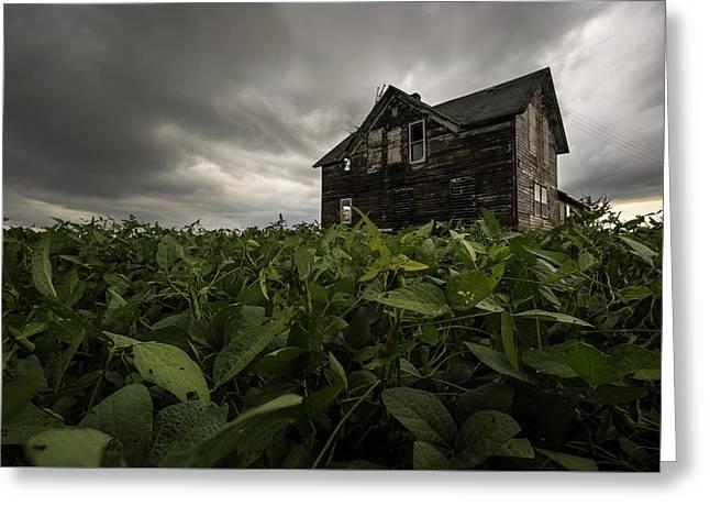 Field Of Beans/dreams Greeting Card by Aaron J Groen