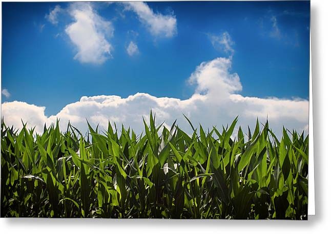 Cornfield Greeting Cards - Field of Corn Greeting Card by Augustus