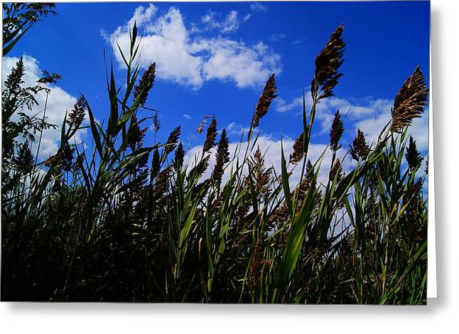 Texture Snow Scapes Greeting Cards - Field of dreams 2 Greeting Card by Joshua Tillery