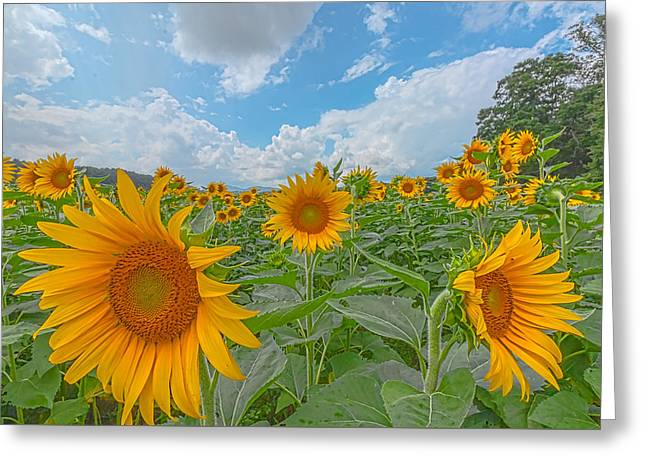 Recently Sold -  - Botany Greeting Cards - Field Of Dreams Greeting Card by William Pattison