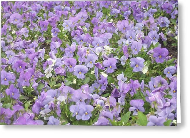 Anna Villarreal Garbis Greeting Cards - Field of Flowers Greeting Card by Anna Villarreal Garbis
