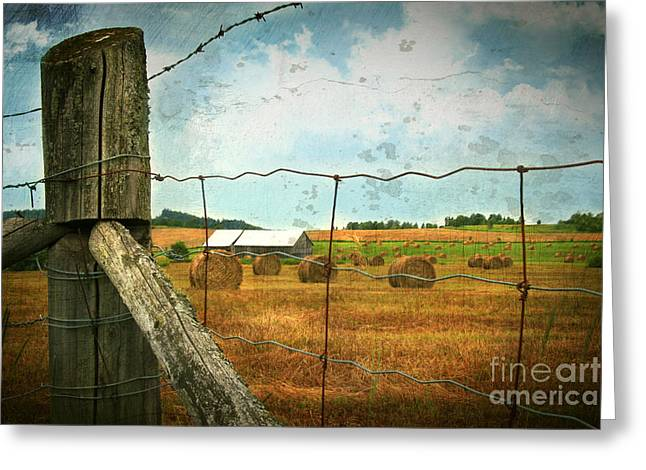 Field Of Freshly Cut Bales Of Hay Greeting Card by Sandra Cunningham