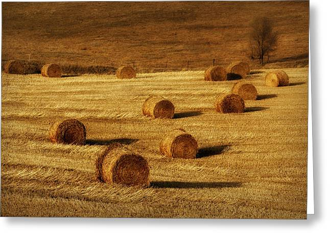 Field Of Gold #1 Greeting Card by Nikolyn McDonald