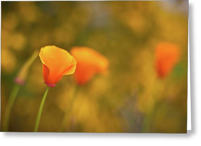 Field Of Gold Greeting Card by Mike Reid