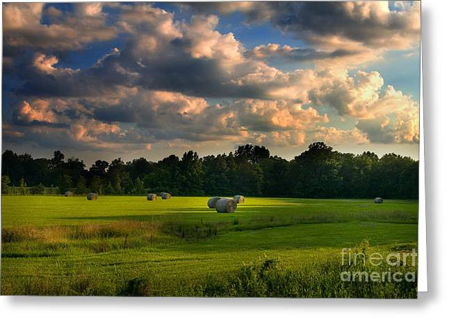Field of Grace Greeting Card by T Lowry Wilson