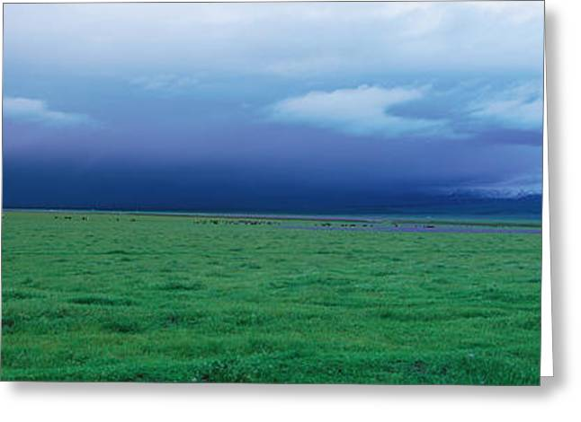 Grapevine Greeting Cards - Field Of Grass Under Winter Storm Greeting Card by Panoramic Images