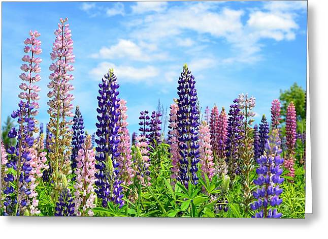 Field. Cloud Greeting Cards - Field of Lupine 2  Greeting Card by Nathalie Duhaime
