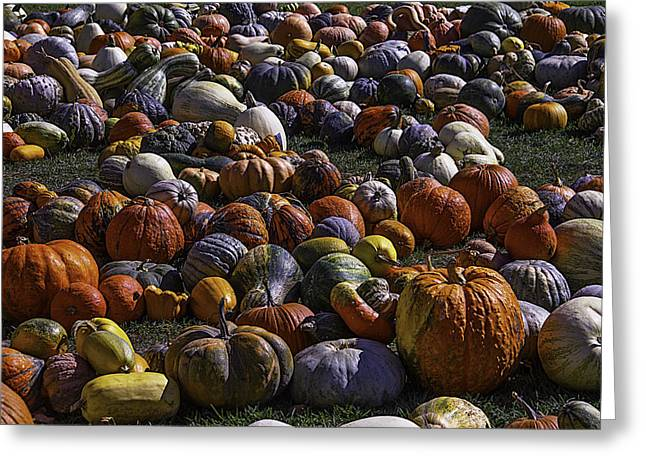Field Of Pumpkins And Gourds Greeting Card by Garry Gay