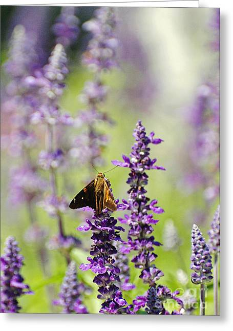 Fancy Eye Candy Greeting Cards - Field of Purple flowers Greeting Card by Anahi DeCanio