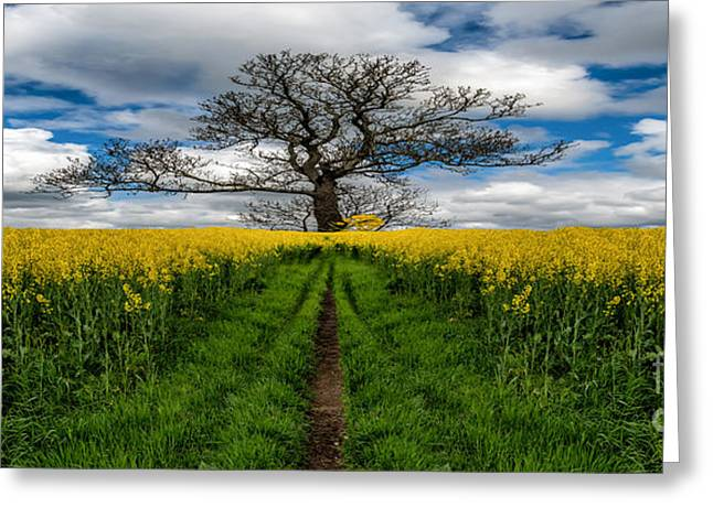 Field. Cloud Greeting Cards - Field Of Rapeseeds Greeting Card by Adrian Evans