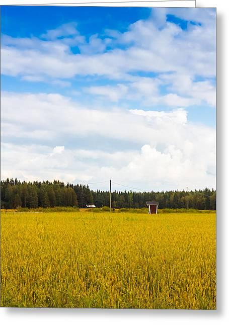 Field. Cloud Greeting Cards - Field Of Spelt Greeting Card by Jukka Heinovirta