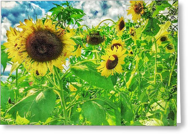 Jame Hayes Greeting Cards - Field of the Suns  Greeting Card by Jame Hayes