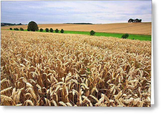 Grained Greeting Cards - Field of Wheat Greeting Card by Nailia Schwarz