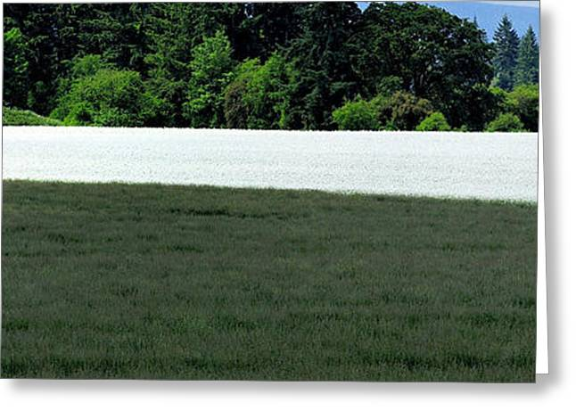Farmers Field Greeting Cards - Field of White Mustard 1465 Greeting Card by Jerry Sodorff